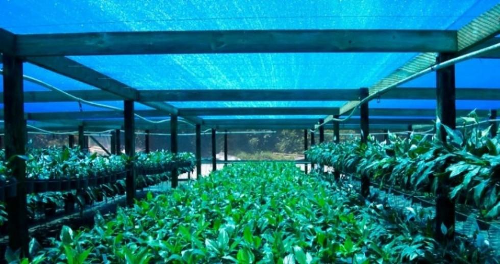 Three ways to shade your greenhouse
